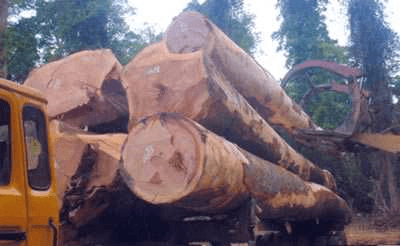 Logs From Africa