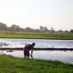 EGYPT: Sewage-fed vegetable plots pose health risk