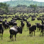 Tanzania halts road plans across Serengeti