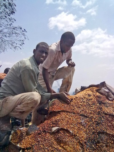 Shopkeepers try to salvage for unburnt grains after a severe fire broke out in the main market of Dagahaley refugee camp © Moulid Hujale/IRIN