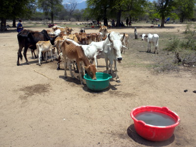 Water shortage another serious problem to pastoralists