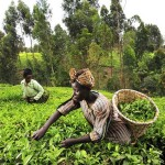 Free Online course – Africa: Sustainable Development for All?
