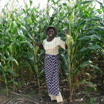 Commercial farming to boost food security in Tanzania