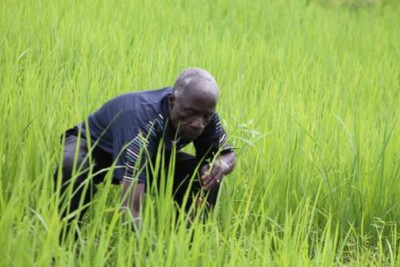 Emmanuel Krayee, a farmer of Duogee, Grand Gedeh County weeding grass