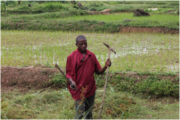 Nebassco Wreh , a  Cash for Work farmer in River Gee County