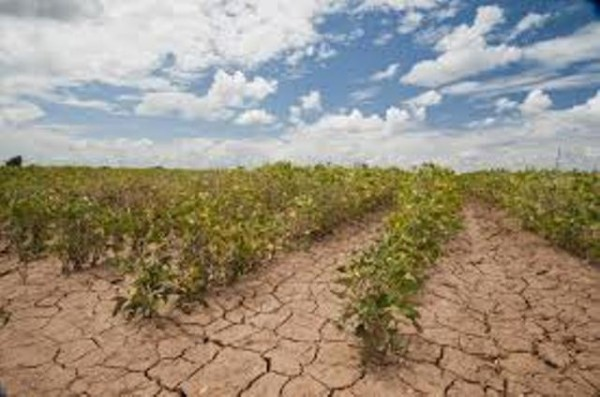 Poor yields due to the effects of climate change