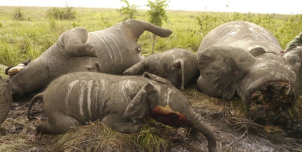 It is assumed that some politicians in Tanzania are involved in the illicit animal poaching business