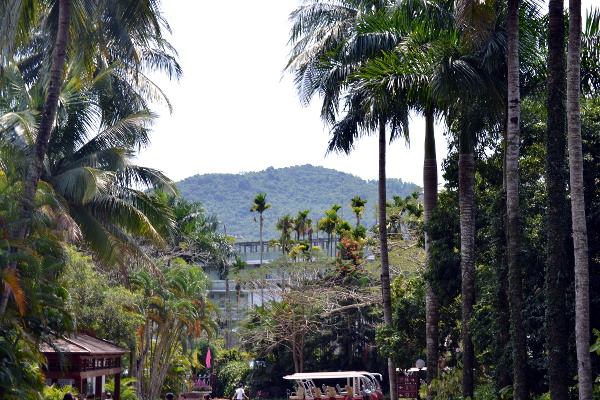 Some African plantations are now found at the Xinglong Tropical Botanical Garden for research purposes and preservation