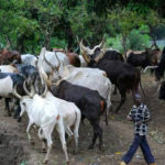 Nigeria's Government secures 55,000 hectares in eleven States for grazing reserves